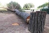 27/11/2018 - La comunicazione di avvio procedimento necessaria anche per il taglio di alberi sulla strada